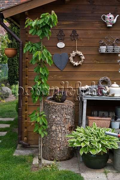 Image Wreath of wild berries for birds - 483052 - Images ...