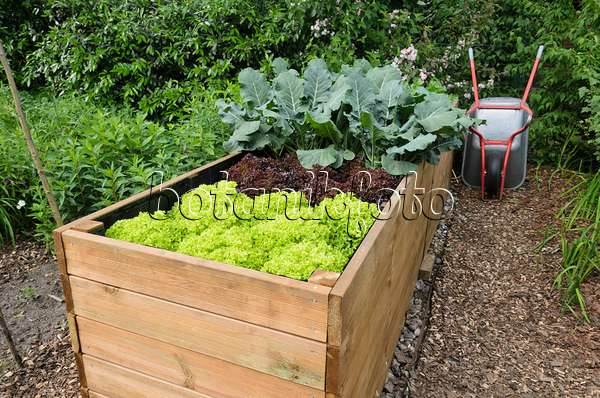 image raised beds with hand barrow and hose reel 545123 images and videos of plants and. Black Bedroom Furniture Sets. Home Design Ideas