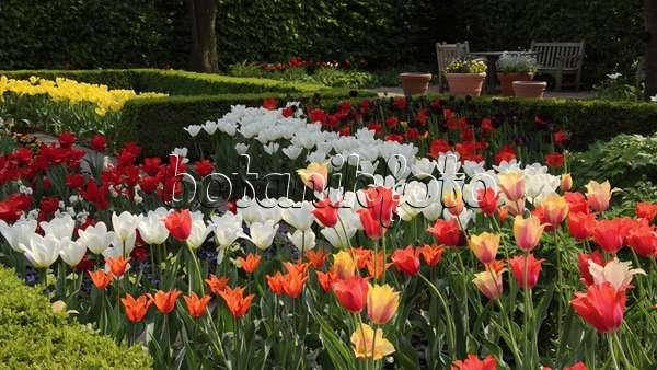 video fr hlingsgarten mit tulpen tulipa 495380 bilder und videos von pflanzen und g rten. Black Bedroom Furniture Sets. Home Design Ideas