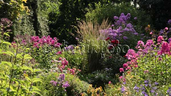 video staudenphlox phlox paniculata und moorreitgras calamagrostis x acutiflora 39 karl. Black Bedroom Furniture Sets. Home Design Ideas