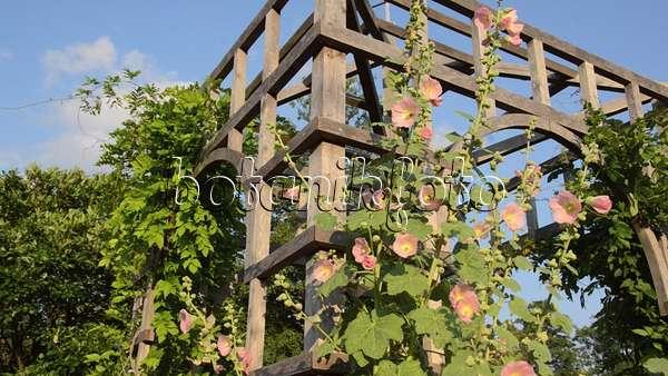 Video Staudengarten Mit Gartenpavillon - 498319 - Bilder Und ... Garten Pavillon Tropische Pflanzen