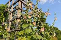 Bilder Pavillons - Bilder Und Videos Von Pflanzen Und Gärten ... Garten Pavillon Tropische Pflanzen
